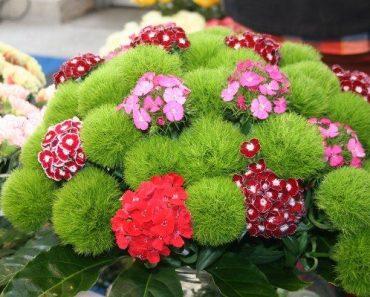 süs bitkileri